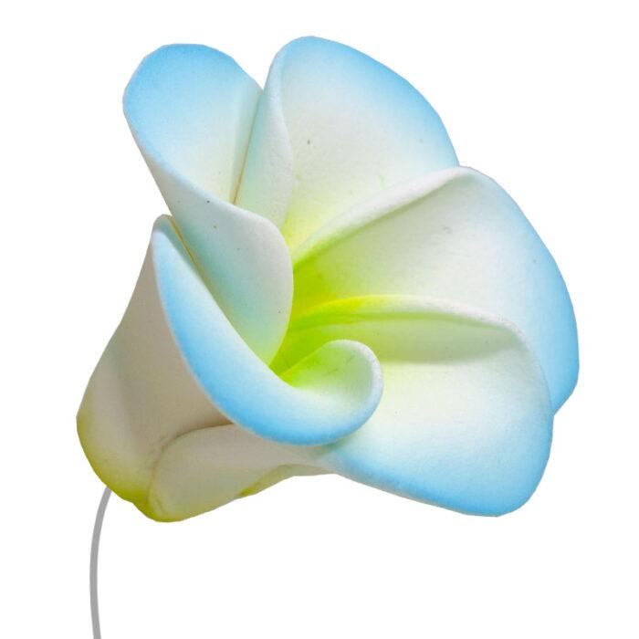 Άνθη Ζύμης Λουλούδι Λαχανί Κίτρινο Θαλασσί (τεμ).